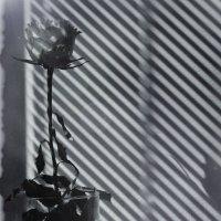 свет и тени :: Юрий Ващенко