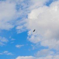 птица в небе :: Света Кондрашова