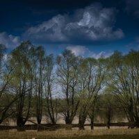 Дерева :: Vasiliy V. Rechevskiy