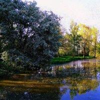 Старый пруд. Когда цветёт черёмуха... :: Nina Yudicheva