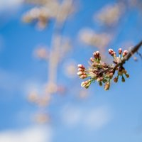 Весна :: Елена Семёнова