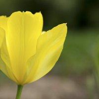 Желтая красота :: Руслан Лутов