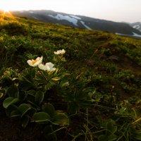 Камчатская весна :: алексей афанасьев