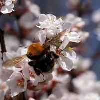 весенний сад :: Елена Кирьянова