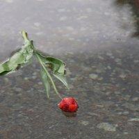 Цветок Скорби :: Наталия Григорьева