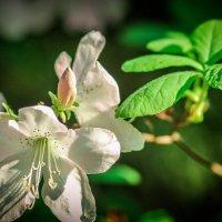 Фотопрогулка в Ботанический сад Минска. :: Nonna