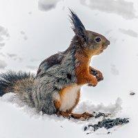 Решила поменять шубу, а тут бах, - и зима!!! :: Сергей Черных