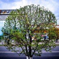 Круглое дерево :: Сергей Алексеев