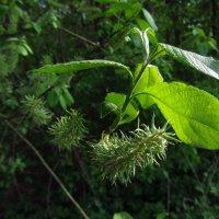 Немного ботаники :: Андрей Лукьянов
