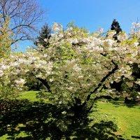 Гуляя в японском саду 2 :: Alexander
