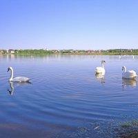 Лебединое озеро :: Vladimir Semenchukov