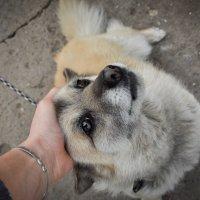 Собака :: Влад