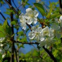 Весна.9 Мая. :: Михаил Рогожин