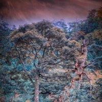 сказочный лес :: Slava Hamamoto