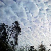 Небо над питомником-5 :: Сергей Гвоздев