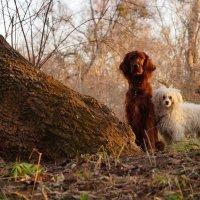 В лесу :: Юлия Фадеева