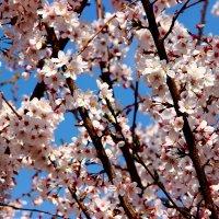 Воспоминания о весне... :: Светлана