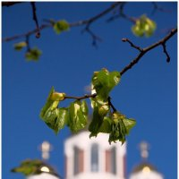 весна... :: BEk-AS 62