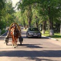 Лошадь пришла первой... :: Сергей Петров