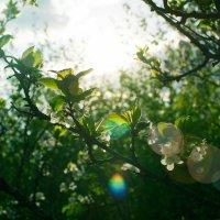 Расцветает всё вокруг :: Анастасия Жигалёва