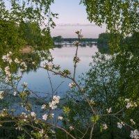 Сквозь ветви яблоньки цветущей :: Михаил (Skipper A.M.)