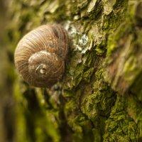 Домик на дереве :: Андрей Михайлин