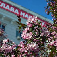 Слава народу :: Полина Потапова