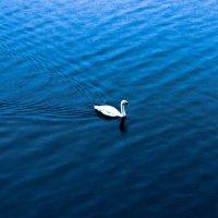 Одинокий лебедь под дождем :: Anton Лилиенталь