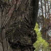 Древесный череп :: Колибри М