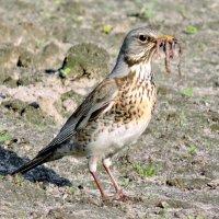 Вкусняшка для птенчиков . :: Hаталья Беклова