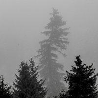 Туман :: Людмила Синицына
