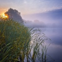 ### :: Андрей Ожерельев