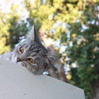 кот♥ :: Дарья