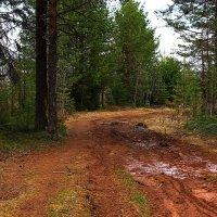 Дорога в лесу. :: Galina S*
