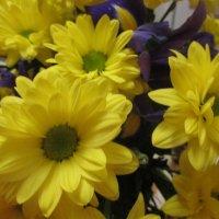 Цветок-солнышко. :: Valentina