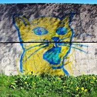 Котик на заборе :: veera (veerra)