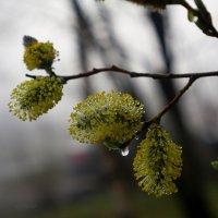 Весна :: НикЛеод