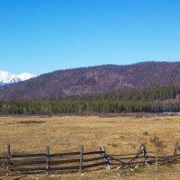 Весна в  долине Хойто-Гол :: Анатолий Иргл