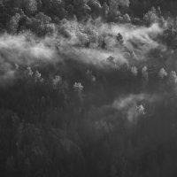 Туман :: Тимофей Ракшин