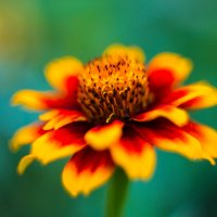 Цветок :: Артём Кыштымов