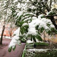 Кемерово, 8 мая :: Евгений Лавров