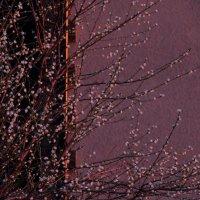 Свет на закате. :: Larisa Gavlovskaya