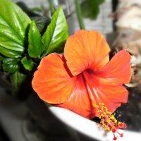 Цветок :: Сандра Гро