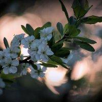Майский сад :: Евгения Иванова