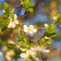 весна :: Седа Ковтун