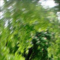И дождь, и ветер, и весна!.. :: Нина Корешкова