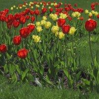 А это всё: цветы, цветы, цветы! :: Владимир Максимов