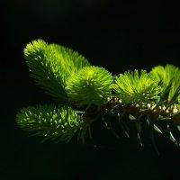 Молодо-зелено :: Swetlana V