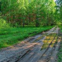 Промчася дождь к деревне Лопухи... :: Лесо-Вед (Баранов)