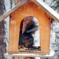 Снег - снегом, а кушать-то хочется!!! :: Наталья Пендюк Пендюк